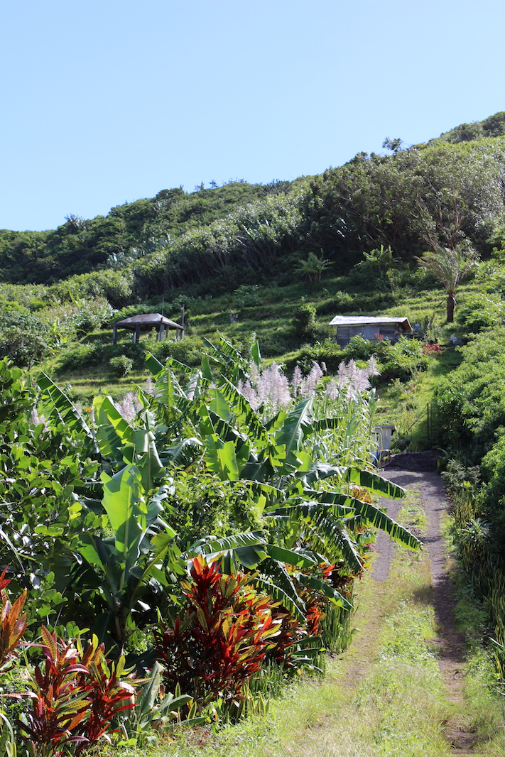 Hiking le Pouce with Children - Mauritius - #nature #mauritius #hiking #moutains