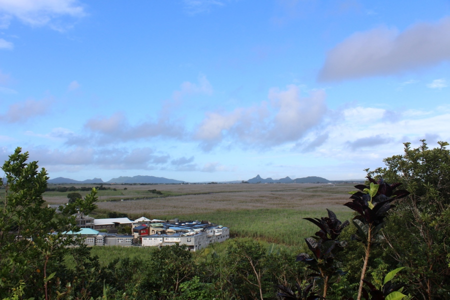 Sugar Cane fields, seen from the little temple on the hill