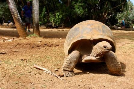 A cute Tortoise!