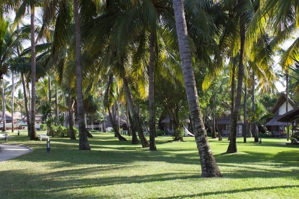 Coconut grove and gardens at la Pirogue Resort in Mauritius