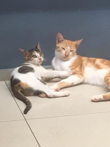 2 cats at Chez Marco Restaurant - Best Pizzeria in Trou aux Biches, Mauritius