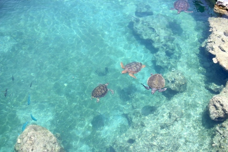 View of Sea Turtles at Kélonia, the turtle observatory in Saint-Leu, Reunion Island
