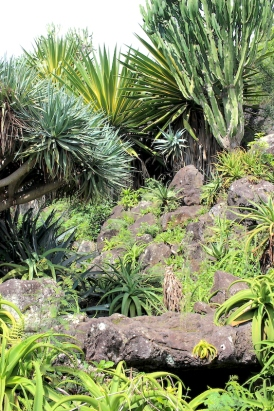View of landscape at the Botanical gardens in Saint-Leu, Reunion Island
