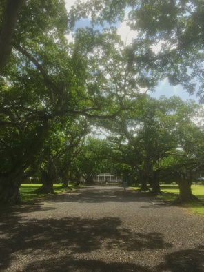 Alley to the main house at Château de Labourdonnais in Mauritius - Things to do in Mauritius
