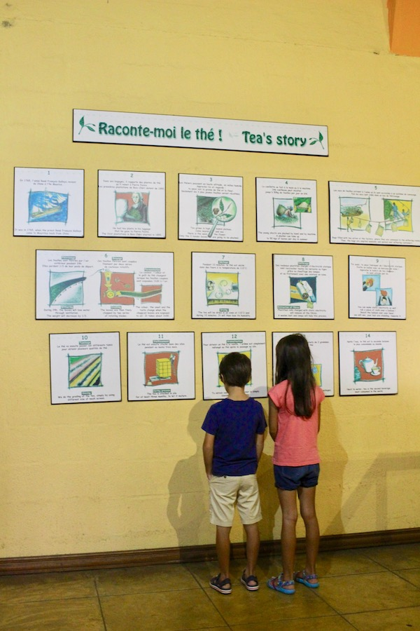 Kids reading posters of Story of Tea in Mauritius - Bois Chéri Tea Plantation, Mauritius - Things to do in Mauritius - visits in Mauritius