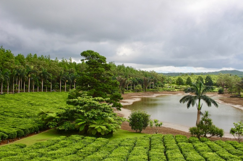View from Cafe at the Tea Plantations of Bois Cheri in Mauritius - Things to in Mauritius - Visits in Mauritius - Enjoy tea tasting in Mauritius