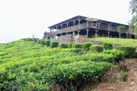 Cafe and panoramique restaurant at the Tea Plantations of Bois Cheri in Mauritius - Things to in Mauritius - Visits in Mauritius