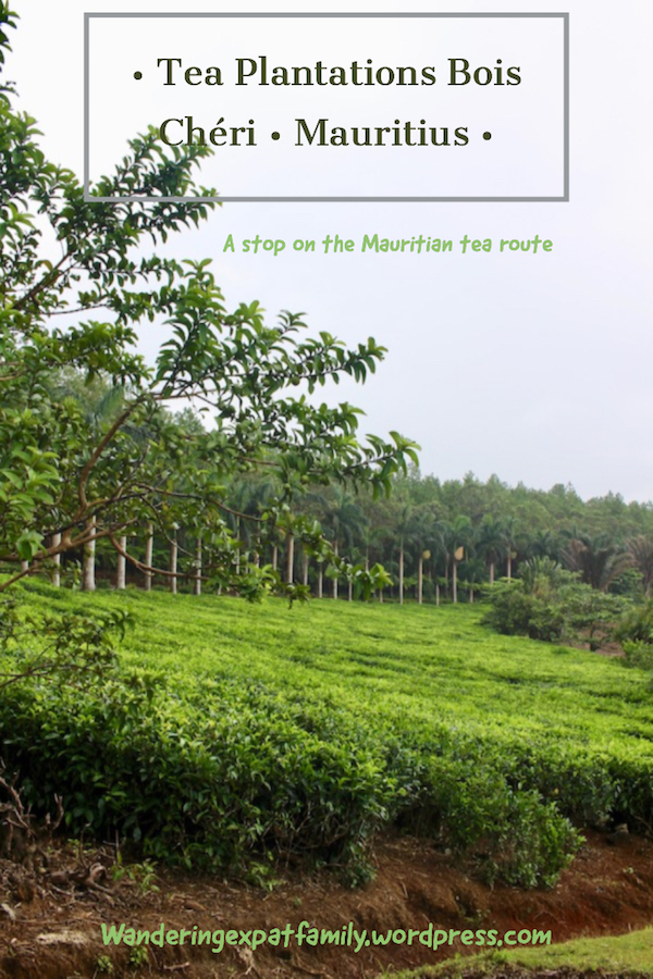 Discover the Tea Plantations in Mauritius - Things to do in Mauritius - Visits in Mauritius