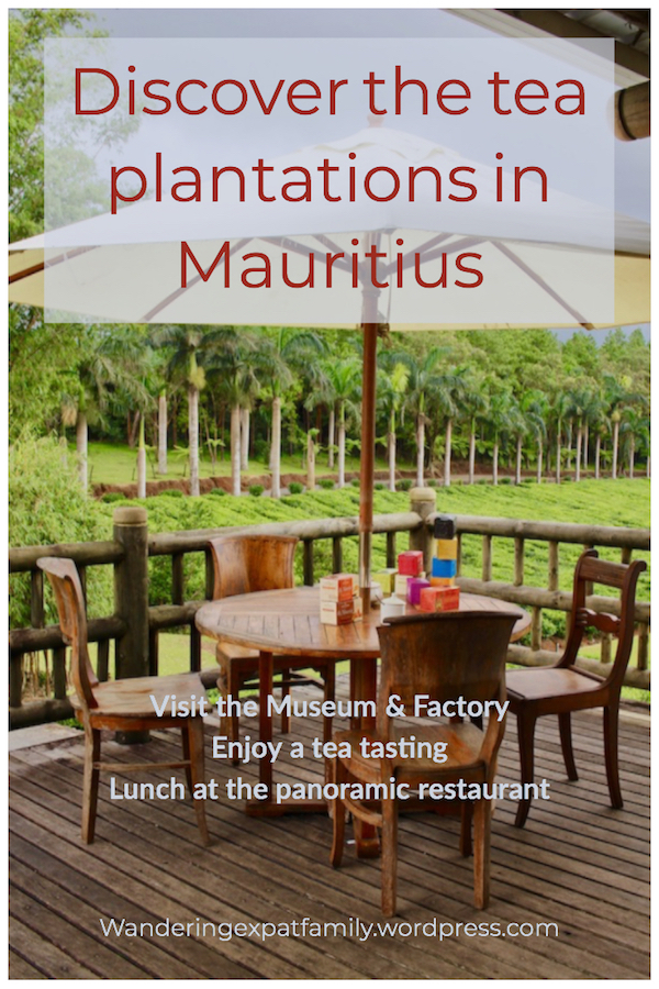 Discover the Tea Plantations in Mauritius - Things to do in Mauritius - Visits in Mauritius Discover the Tea Plantations in Mauritius - Things to do in Mauritius - Visits in Mauritius